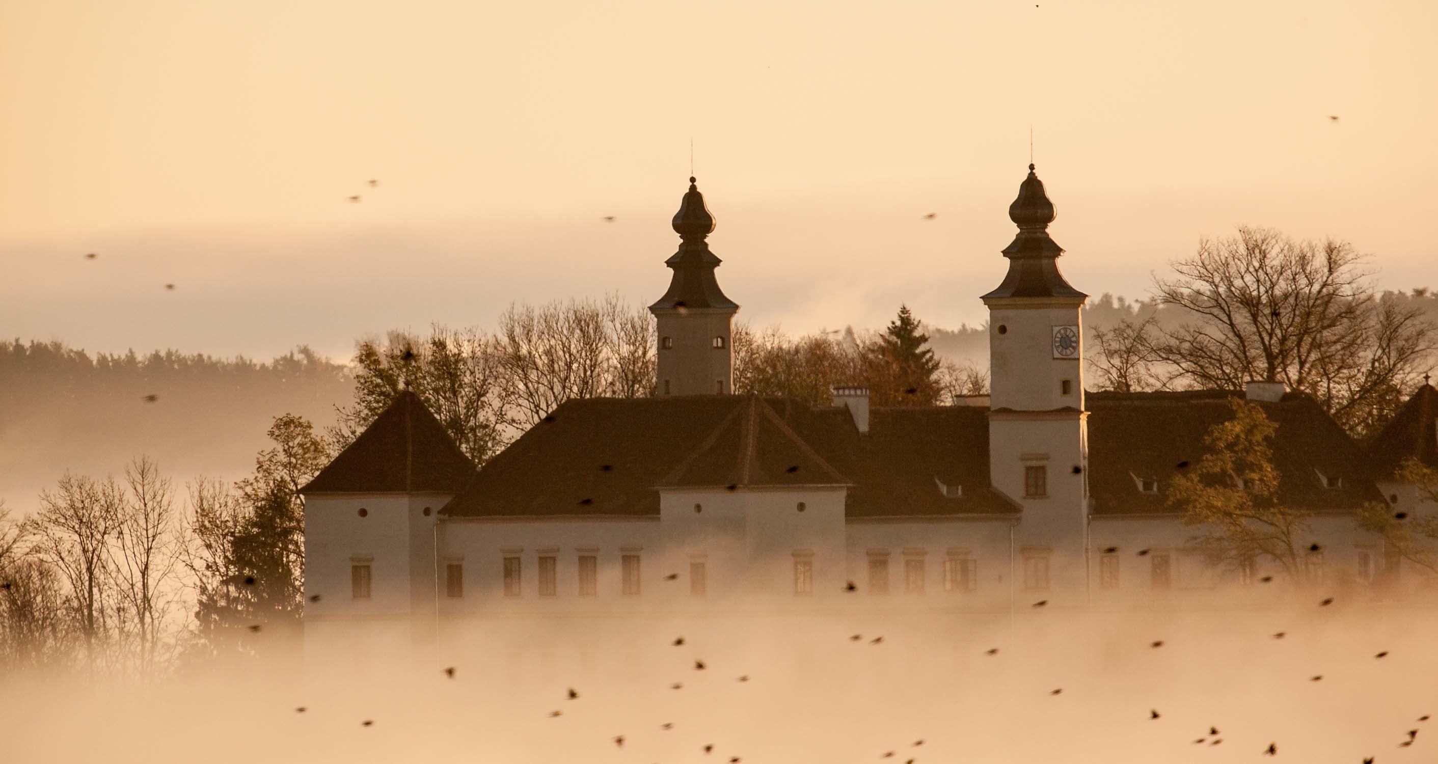 Schloss Freiberg im Nebel